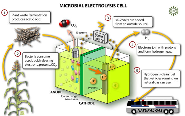 Making fuel from leftovers mit technology review penn state researchers have developed a microbial electrolysis cell which they call beamr to produce hydrogen the process uses bacteria to break down ccuart Image collections
