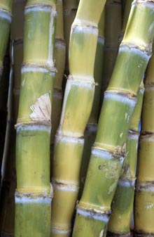 how to make ethanol from sugarcane at home